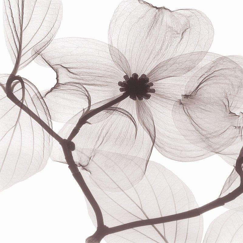 陶瓷艺术背景墙__BJQ1832 山茱萸之恋